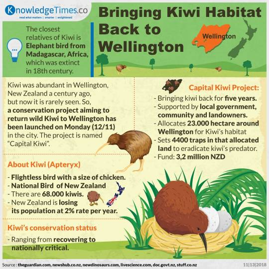 Bringing Kiwi Habitat Back to Wellington
