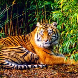 Satwa Dilindungi Menurun Drastis, WWF Minta Perdagangan Dihentikan