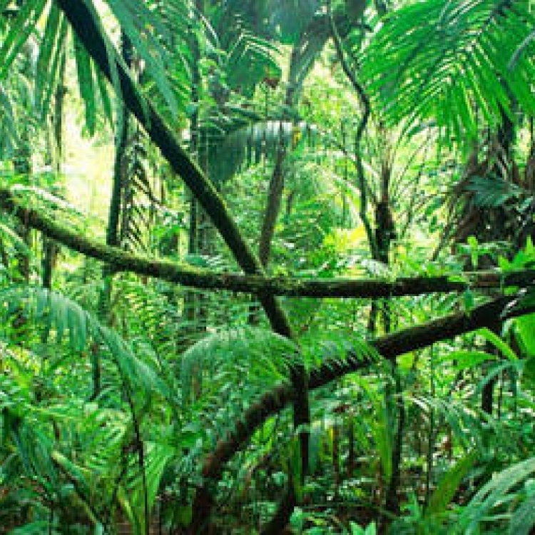 Perhutanan Sosial, Menuju Kesejahteraan Masyarakat Sekitar Hutan
