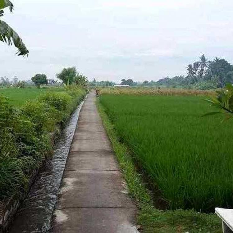 Pestisida Nabati Sampah Cabai dan Tembakau untuk Lingkungan yang Baik