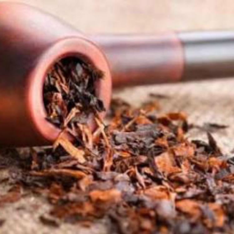Nikotin Tembakau Vs Terong