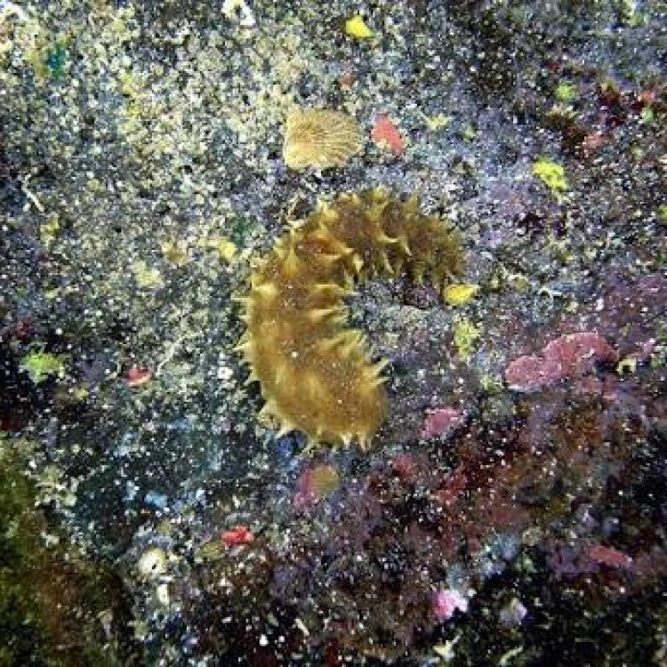 Senyawa Antituberkulosis dari Biota Laut