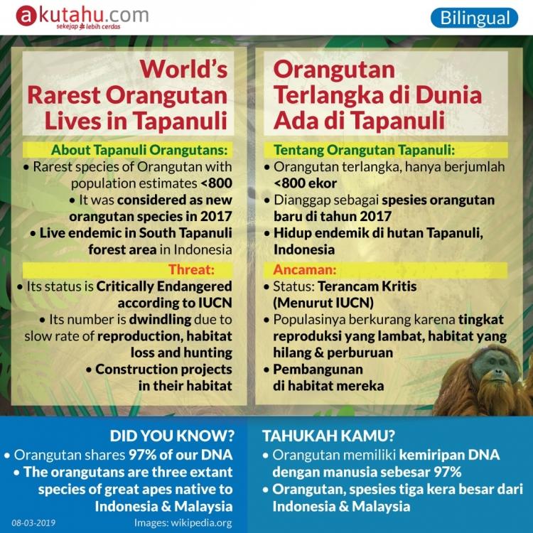 World's Rarest Orangutan Lives in Tapanuli