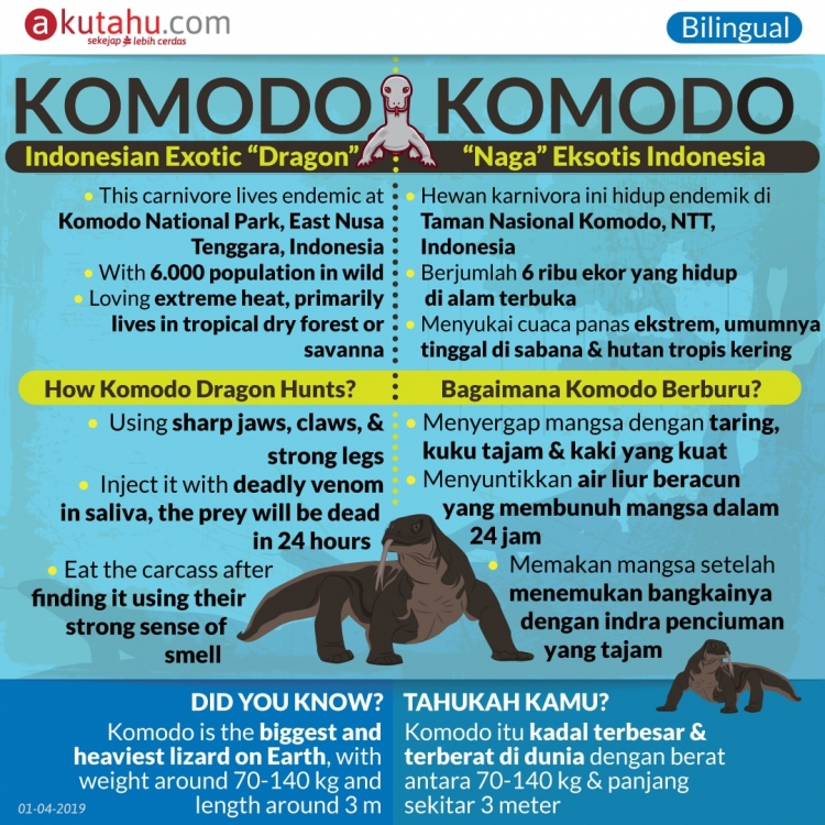 Komodo, Indonesian Exotic Dragon