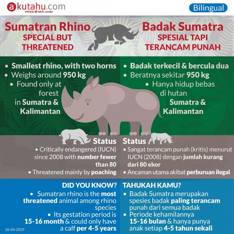 Sumatran Rhino, Unique but Threatened