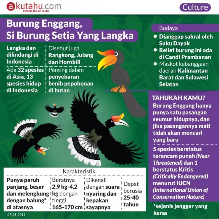 Burung Enggang, Si Burung Setia Yang Langka