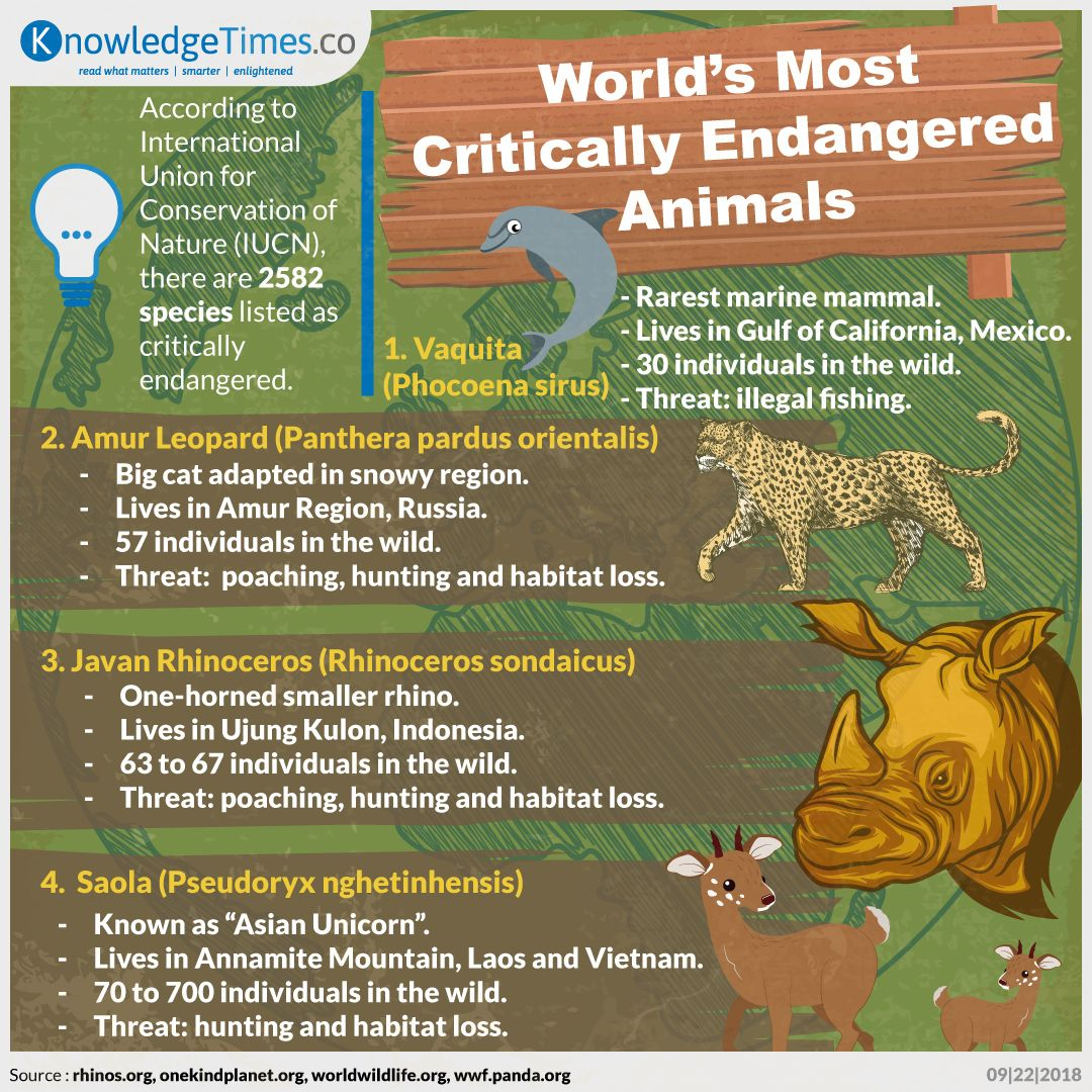 World's Most Critically Endangered Animals