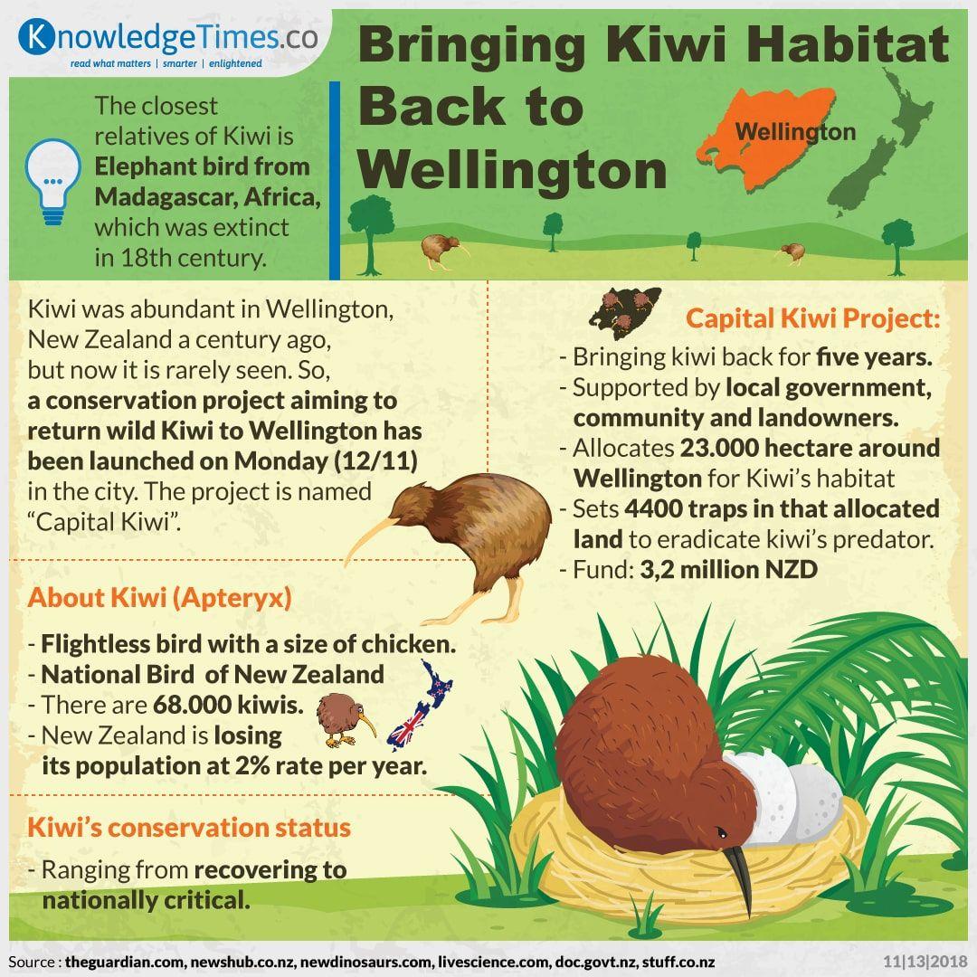 Bringing Kiwi Habitat Back to Wellington