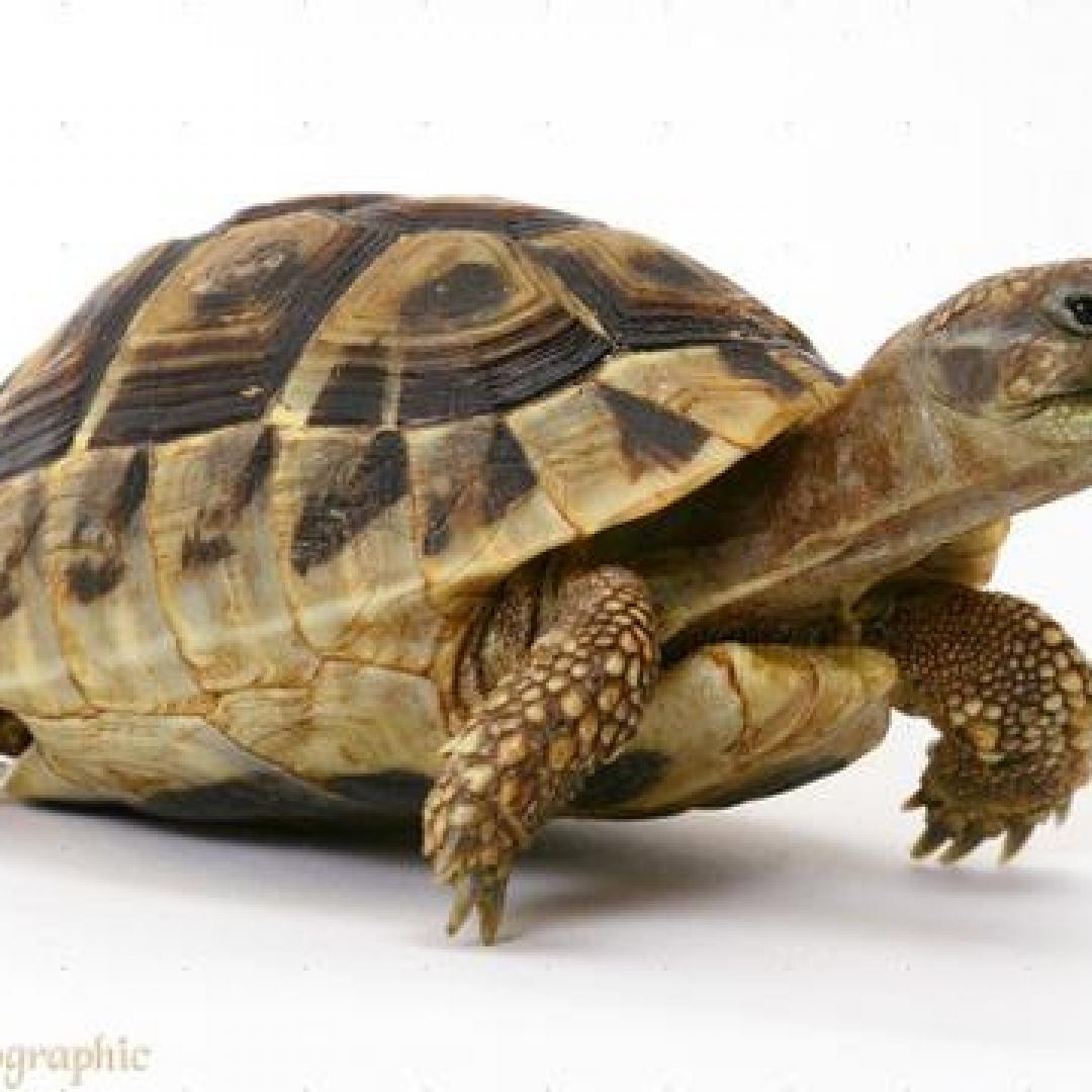 PKSR di Cilegon, Jaga dan Lindungi Kura-kura