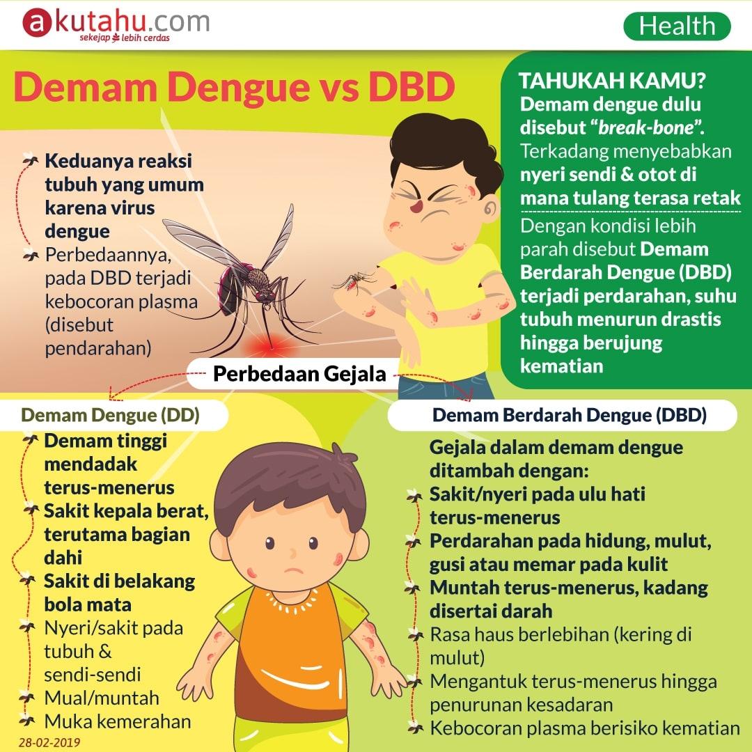 Demam Dengue vs DBD