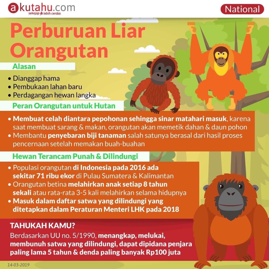Perburuan Liar Orangutan