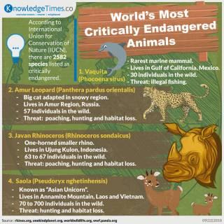 World's Most Critically Endangered Animals