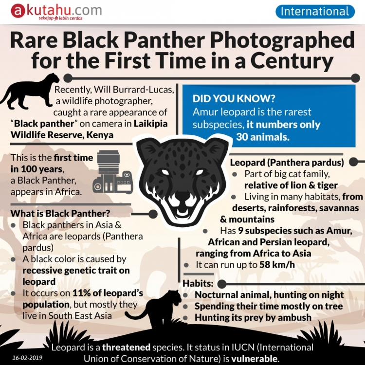 Rare Black Panther Photographed for the First Time in a Century