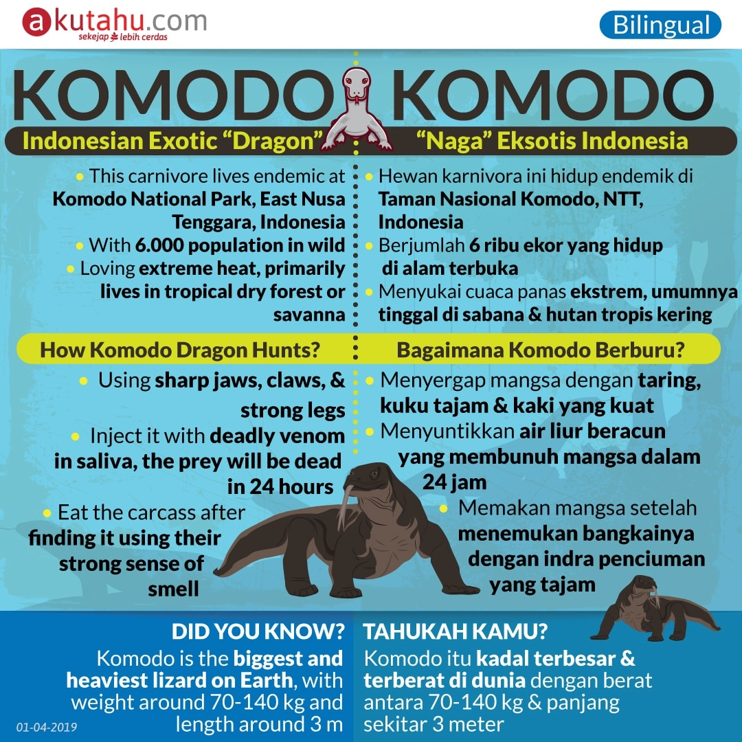 Komodo, Indonesian Exotic Dragon