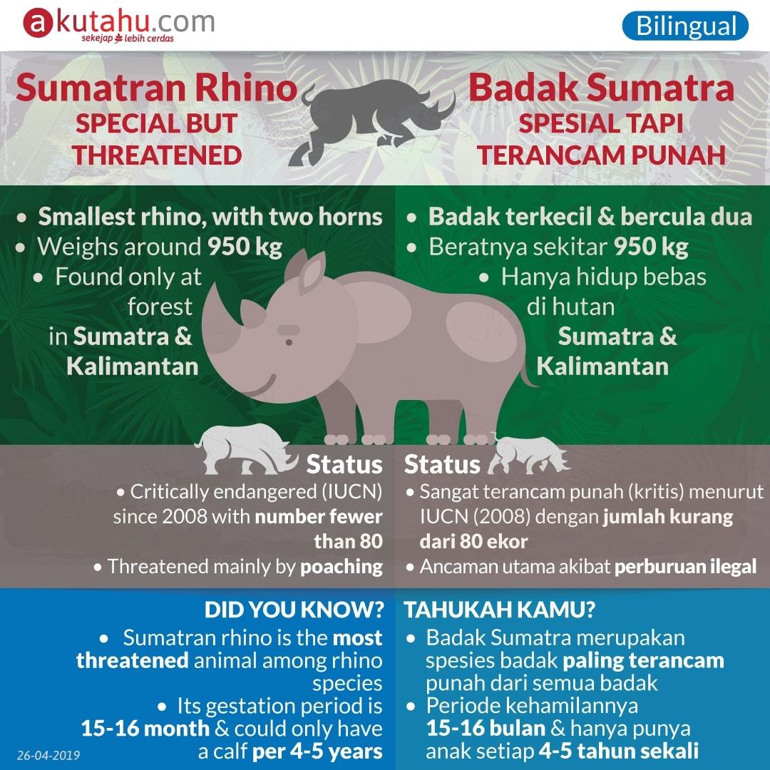 Sumatran Rhino, Unique but Threatened
