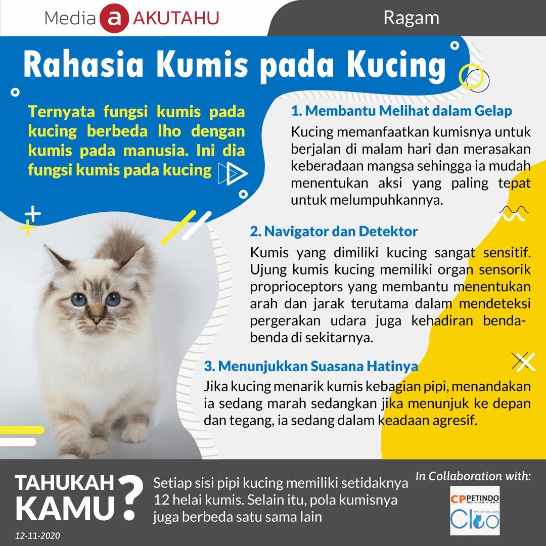 Rahasia Kumis pada Kucing